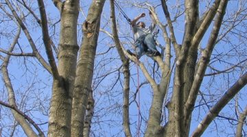 Tree Care Services from Johnson Ops