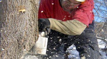 Johnson Ops - Dave Notching Tree