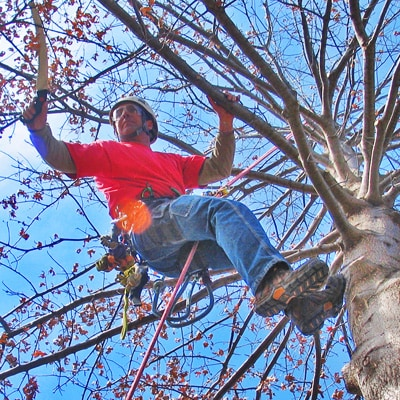 Johnson Ops - Tree Care