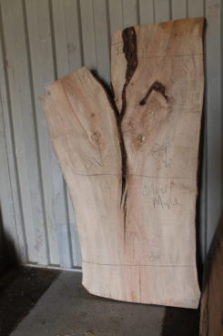 Silver maple live edge slab
