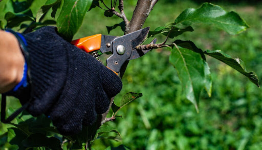 a man cuts a branch with a small garden shears. High quality photo